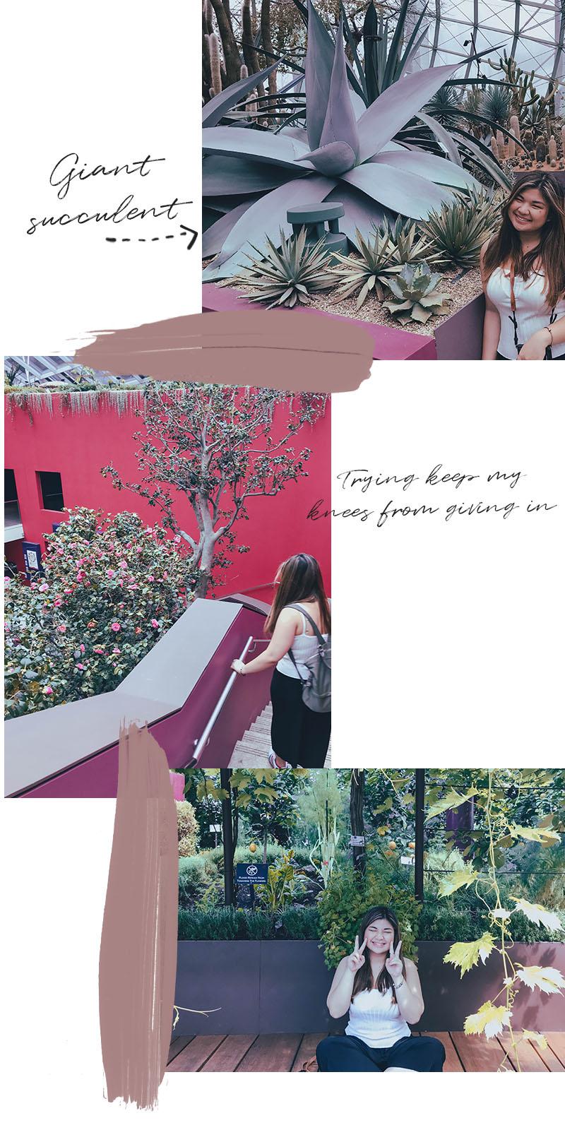 CNJ-SINGAPORE-FLOWERDOME-2.jpg