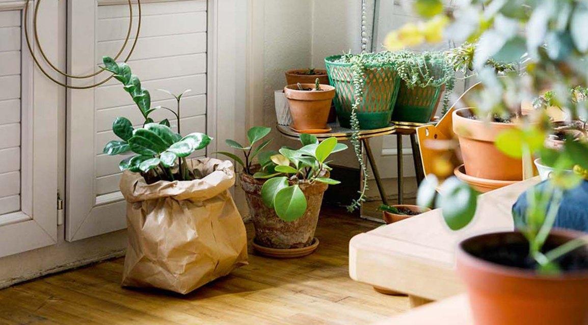 Gardening: An Attempt
